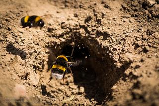 Sommertag mit bumblebee