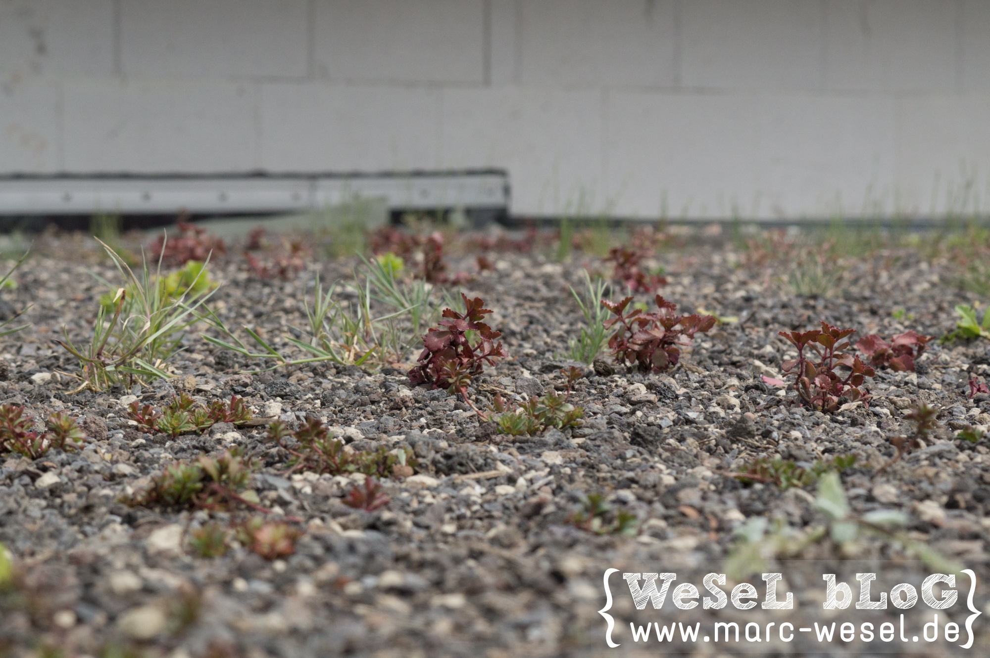 Dachbegrünung / Gründach (Pakete von Bauder) – DIY