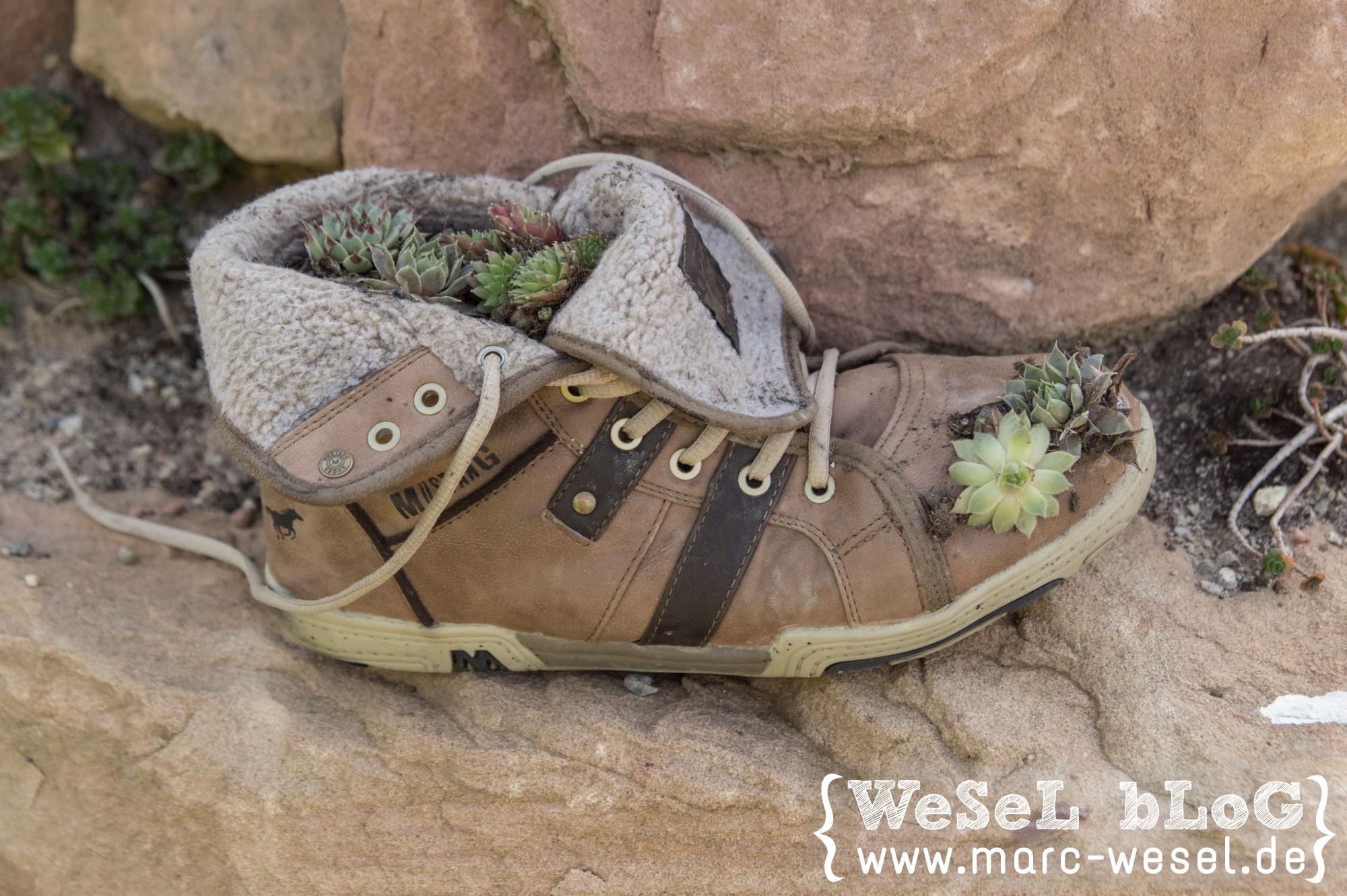Schuh Upcycling mit Hauswurz