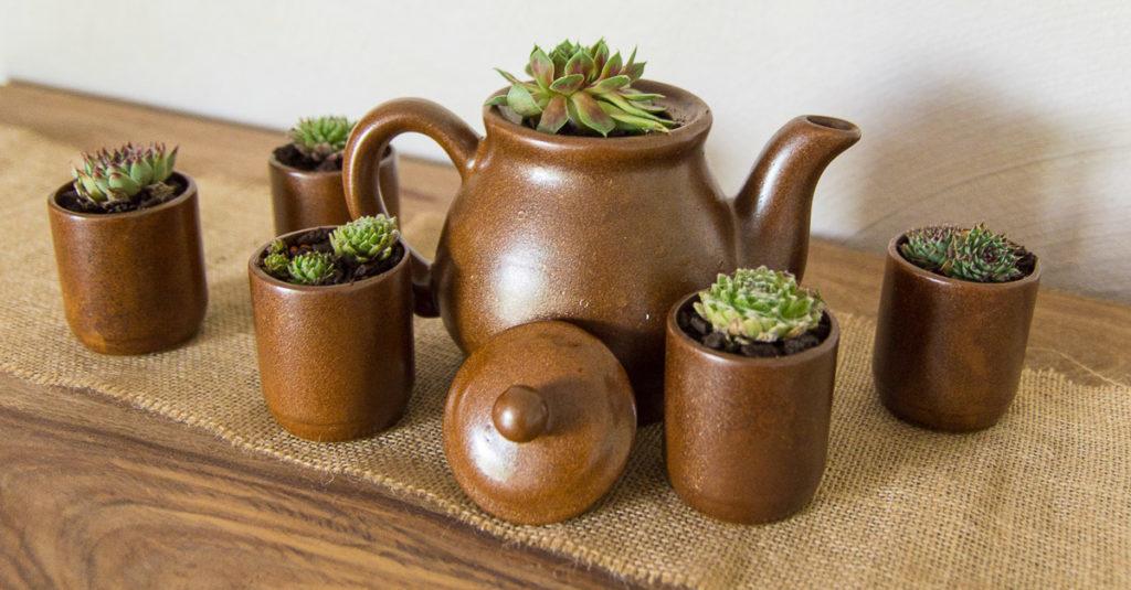 Teeparty mit Hauswurz