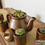Tassengarten: Teeparty mit Hauswurz