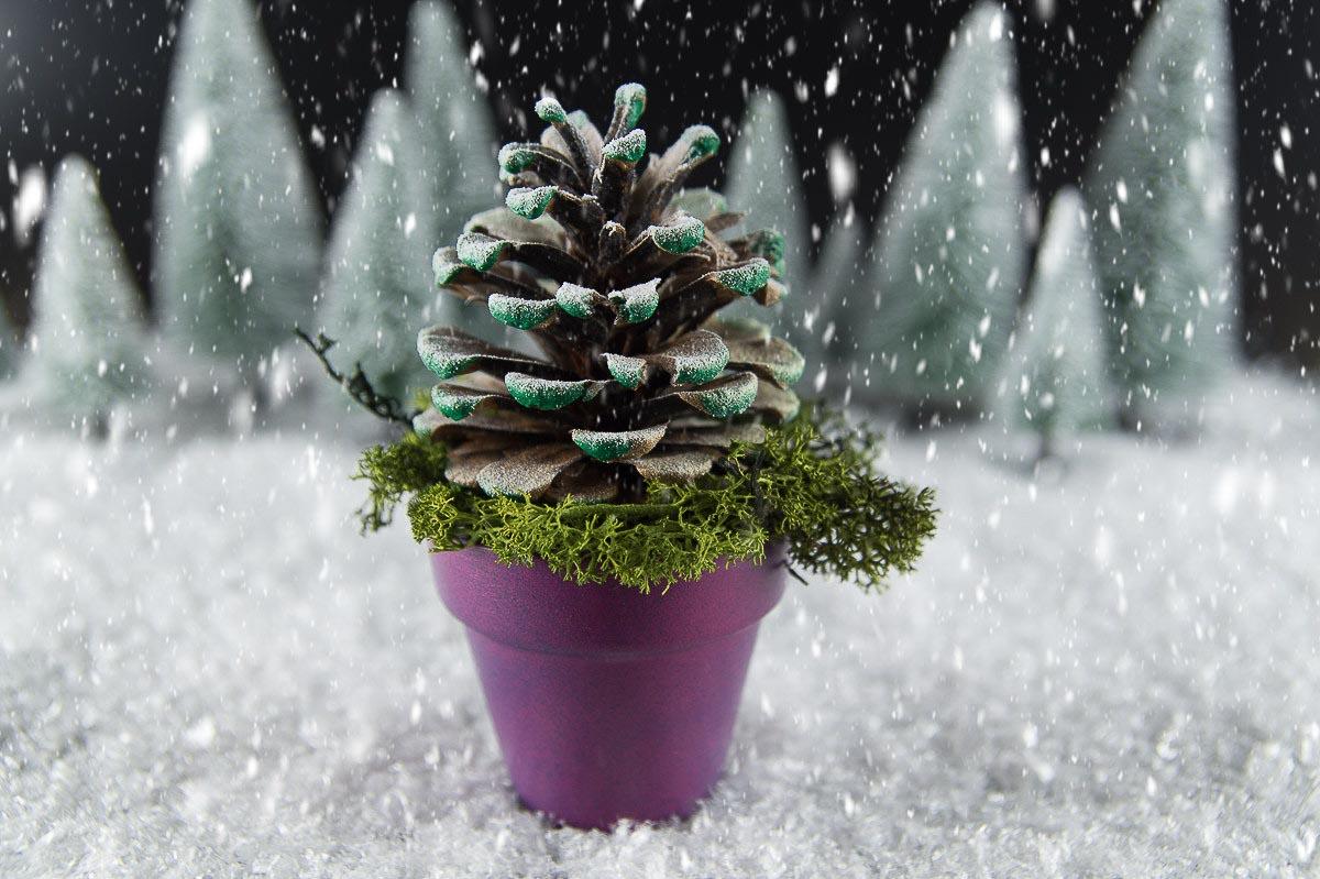 Kierfernzapfen_Weihnachtsbaum