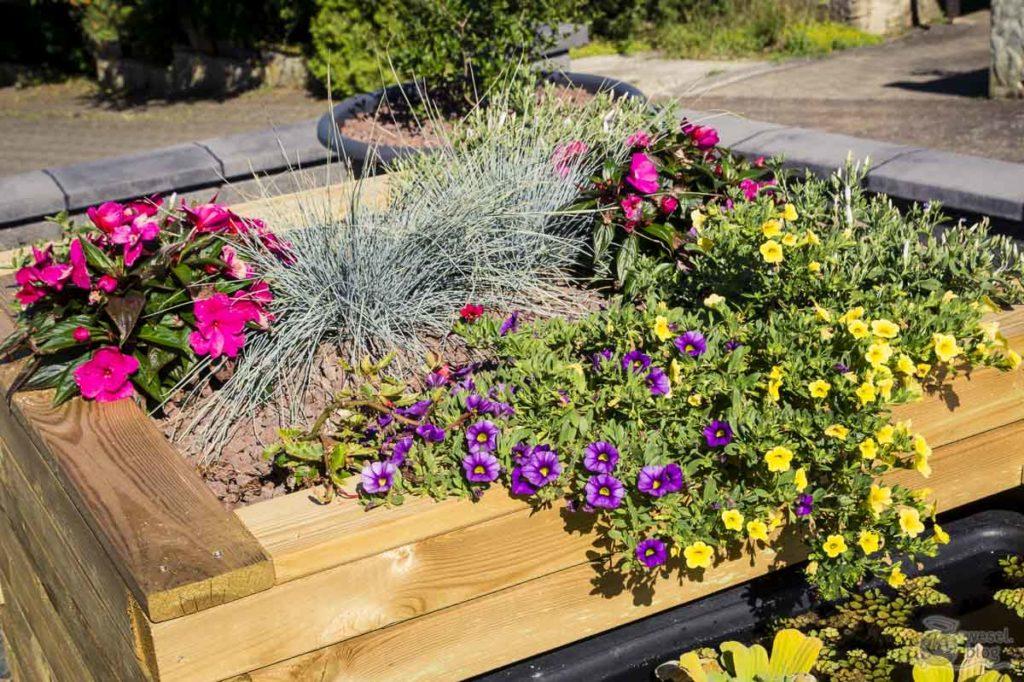 DIY-Hochteich-bepflanzen